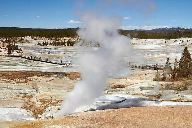 Overview of the many geysers scattered across the Norris Geyser Basin in Yellowstone National Park.