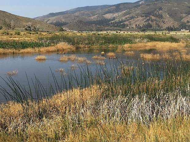 Free programs are planned at Washoe Lake State Park.
