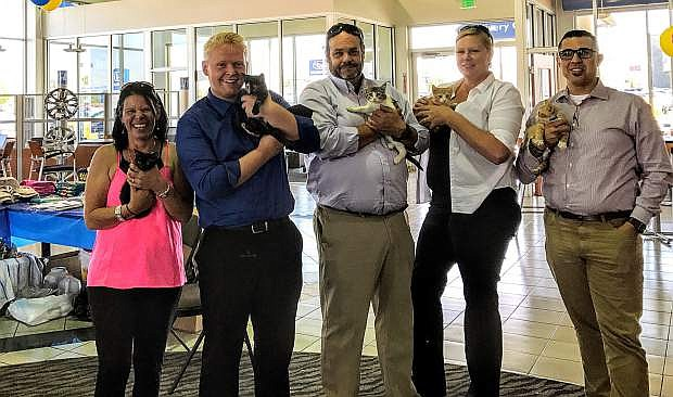 Michael Hohl Honda employees cuddle kittens at an adoption event on July 22.