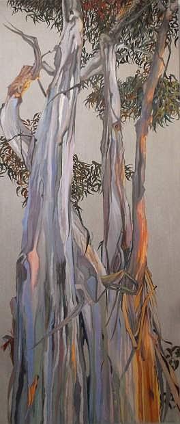 Mary Warner, Eucalyptus, oil on linen, 2015