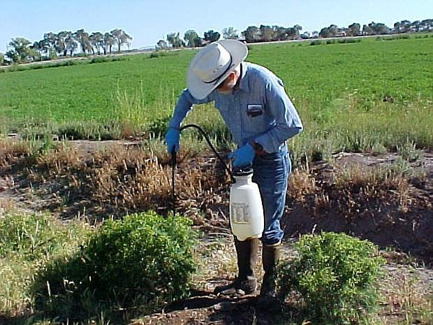 University of Nevada Cooperative Extension will host a training on how to properly use pesticides 8 a.m. to 5 p.m., Nov. 13.