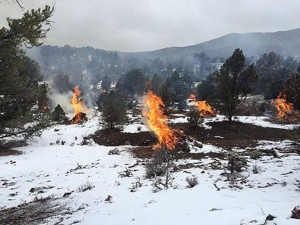 With the goal of maintaining a healthy and diverse ecosystem, the Bureau of Land Management will be conducting controlled burns starting Friday in the Pine Nut Mountains.