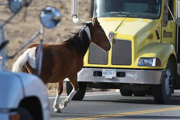 To avoid a hitting a wild horse, trucks come to a quick stop on Flint Road in east Carson City.