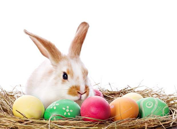 Bunnies are so cute and fun! Just be sure you know the care of these pets before you get one this Easter.