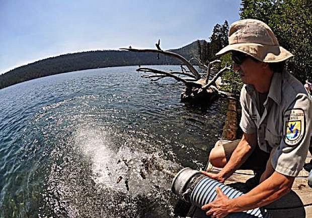 U.S. Fish and Wildlife Services stock more than 8,000 Lahontan cutthroat trout in Fallen Leaf Lake, Tahoe Basin, California, September 10, 2010.