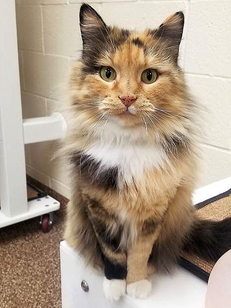 Aslana is a beautiful cat from Pet Network. As Todd shared, cats are wonderful home companions.
