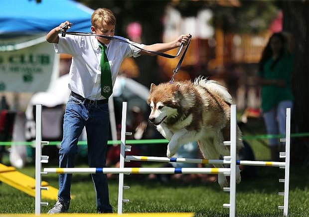 4-H member Tristin LaFever of Reno and his dog Tundra run the dog agility course at the Carson City Fair at Fuji Park in 2017.