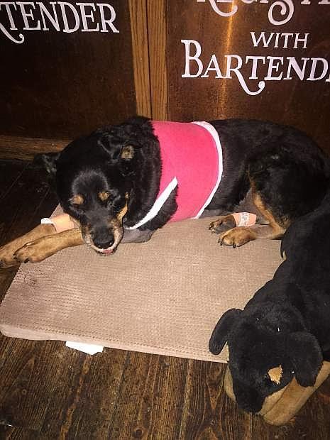 Rest in peace in dog heaven, Ruby.