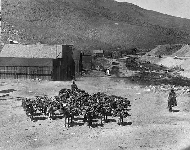 Hauling wood on burros in Bodie, Calif. in 1908.