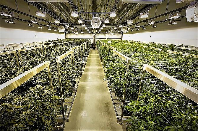 Miles Construction refurbished a vacant warehouse in Verdi into a marijuana factory for Las Vegas-based SRENE.