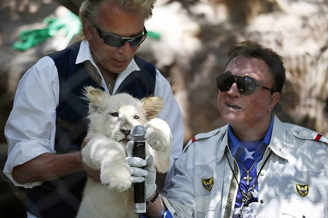 FILE - In this Thursday, July 17, 2014, file photo, Siegfried Fischbacher, left, holds up a white lion cub as Roy Horn holds up a microphone during an event to welcome three white lion cubs to Siegfried & Roy's Secret Garden and Dolphin Habitat, in Las Vegas. Horn, one half of the longtime Las Vegas illusionist duo Siegfried & Roy, died of complications from the coronavirus, Friday, May 8, 2020. He was 75.