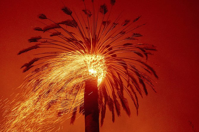 Embers fly from a tree as the Glass Fire burns in St. Helena, Calif., Sunday, Sept. 27, 2020.