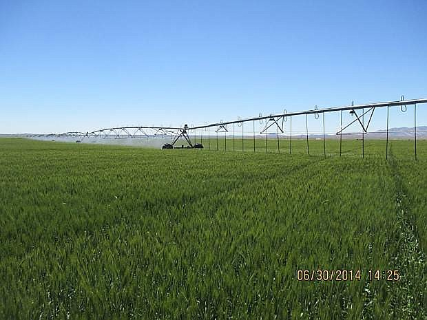 A low energy spray application irrigation system in Arco, Idaho is similar to one installed in Diamond Valley in Eureka County. The goal is to reduce water and energy needed to irrigate alfalfa and Timothy hay crops.